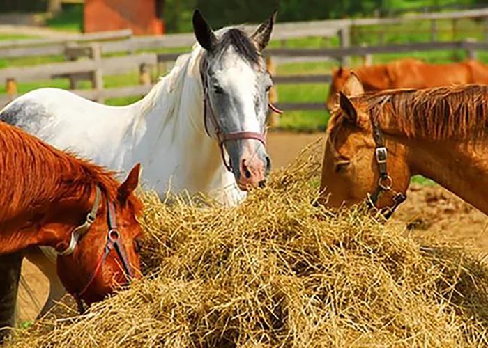 италия самая картинки кормления лошадей эту