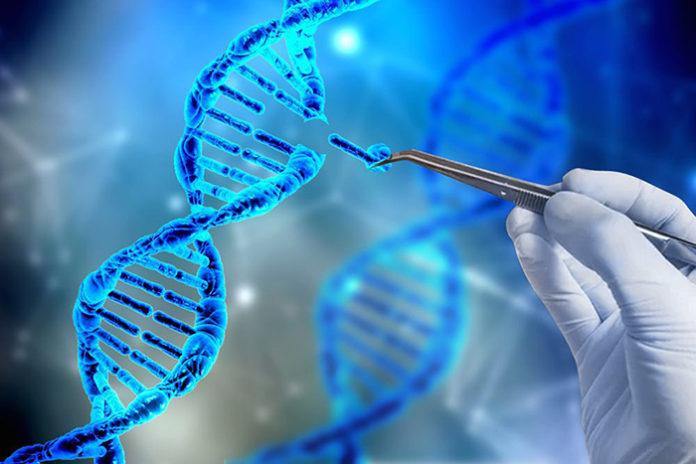 Благодаря генному редактированию удастся избежать забоя «неправильных» животных и распространения опасных инфекций