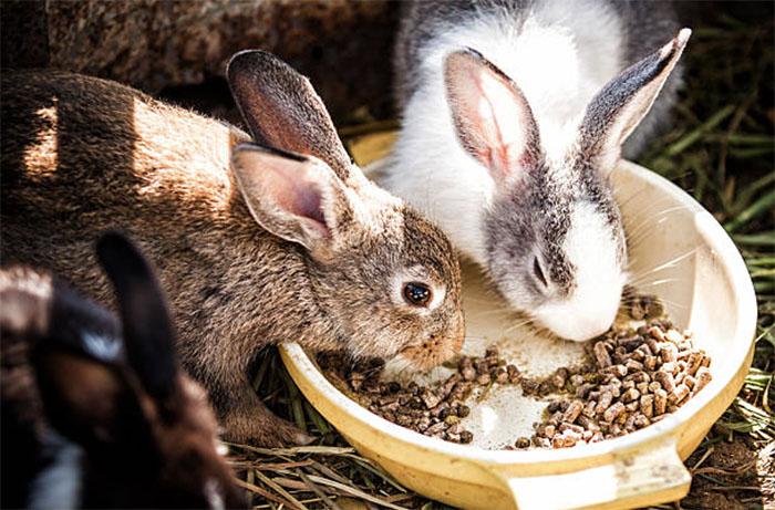Для чего служат белки и в каких кормах для кроликов они содержатся