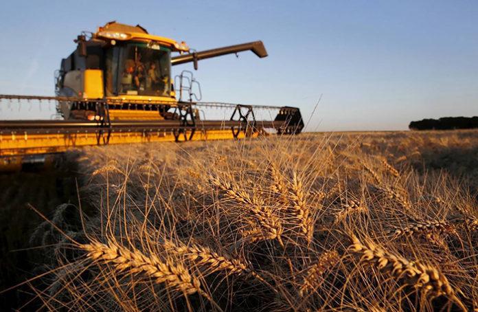 Эксперты осторожно повышают прогнозы урожая зерна в России в 2019 году