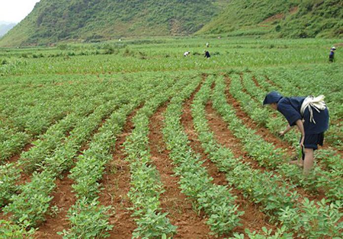 Китай последовательно реализует программу повышения плодородия сельхозземель