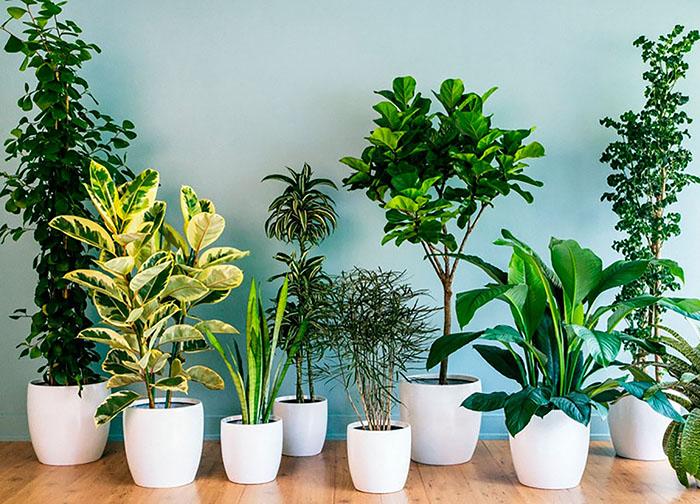 Лучшие комнатные растения очищающие воздух