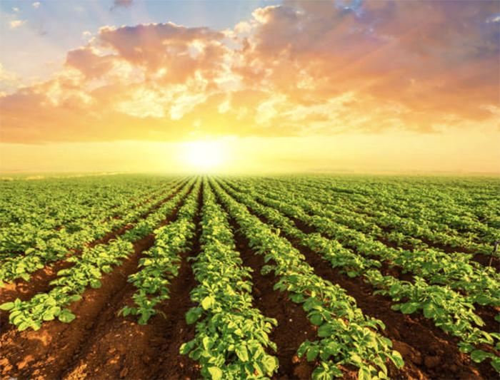 Лукашенко картофель рентабельнее нефти
