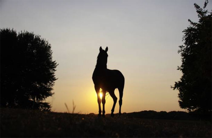Масти и отметины лошади