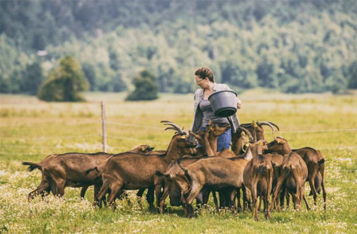 Методы разведения коз