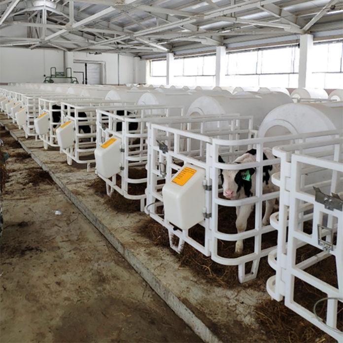 На Сахалине готовятся к приёму партий крупного рогатого скота