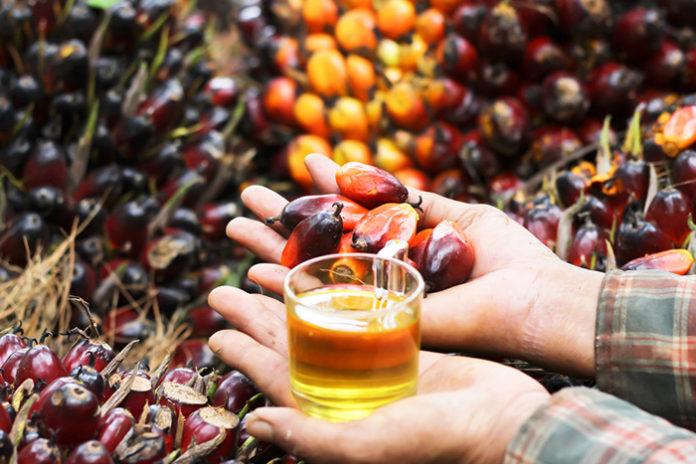 Не пальмой единой. Нужно ли России столько импортного масла?