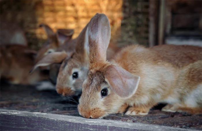 Оборудование крольчатника