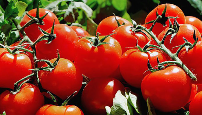 Планируется увеличение квоты на поставки помидоров из Турции