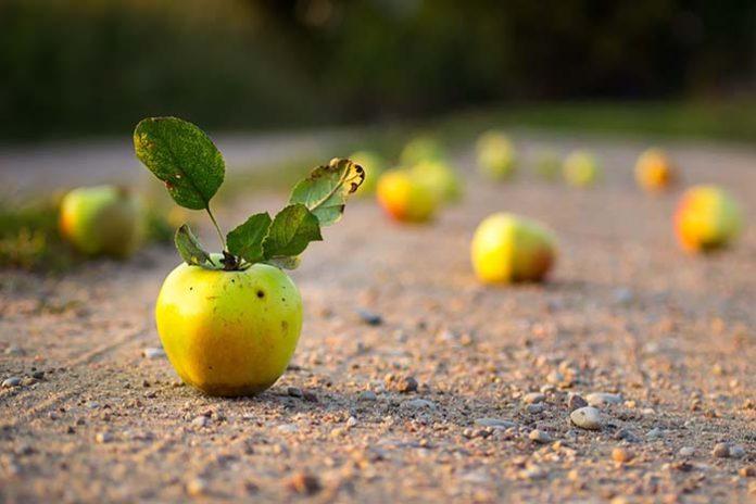 Протестующие польские фермеры перекрыли дорогу в Варшаве яблоками