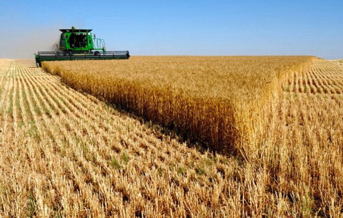 Рекордный урожай пшеницы ожидается в России