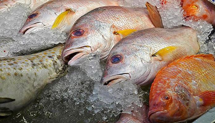 Россияне могут столкнуться с дефицитом рыбы