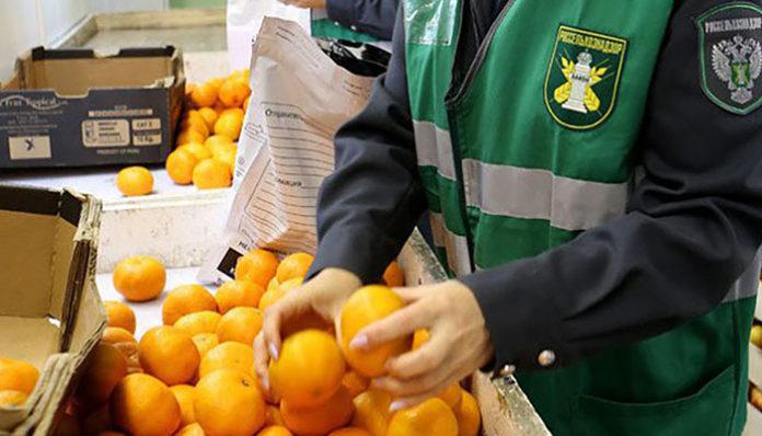 Российские тепличники лоббируют возврат Россельхознадзору функций пограничного контроля за качеством импортных овощей и фруктов