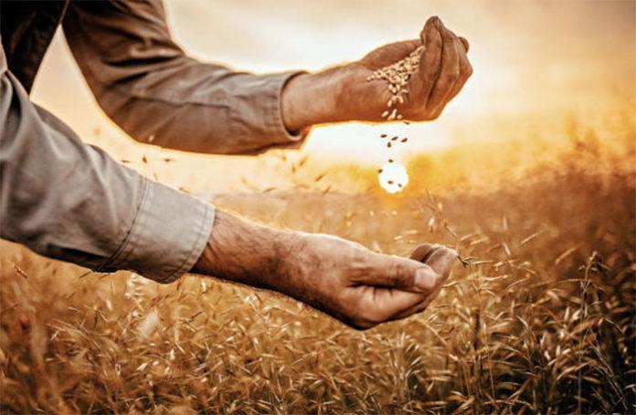 Российский зерновой рынок разнонаправленная динамика цен сохраняется
