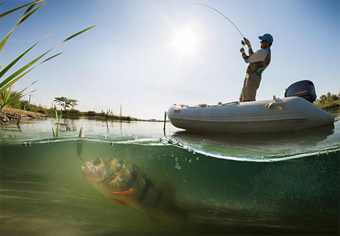 Рыбы, разводимые в прудах