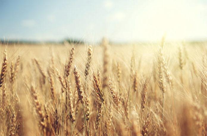 Сельское хозяйство может дополнительно получить кредитов на 300 млрд рублей