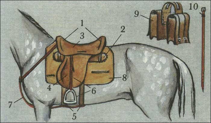 Снаряжение верховой лошади