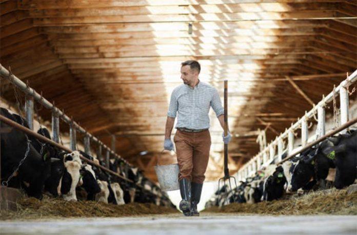 Чем ещё живут фермеры Рязанской области?