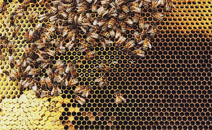 Советы для покупки пчелопакетов