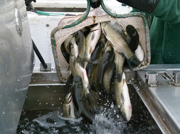Транспортирование живой рыбы