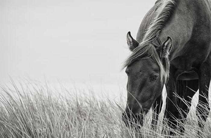 Травмы лошадей