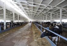 В Черемховском районе Иркутской области создадут кооператив по заготовке, переработке и сбыту мяса