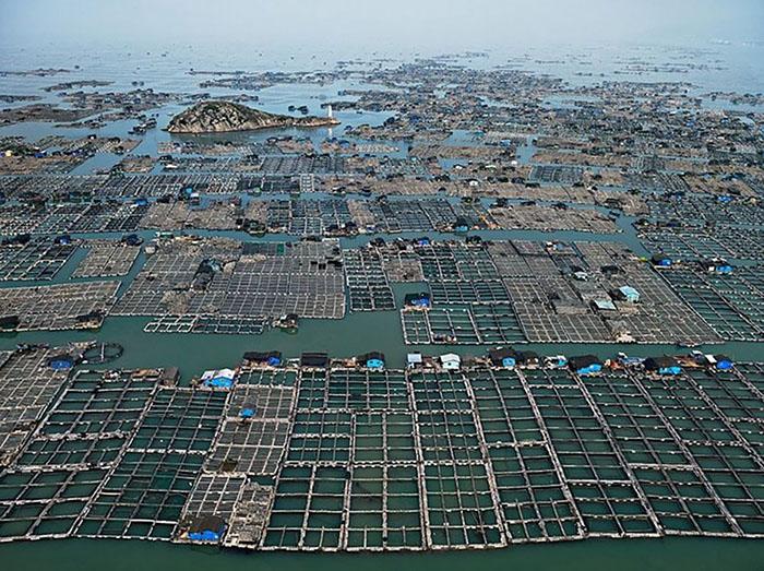 В Китае делают ставки на экологичность рыбоводческой продукции