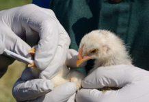 В Подмосковье усилили профилактику птичьего гриппа из‑за весенней миграции пернатых