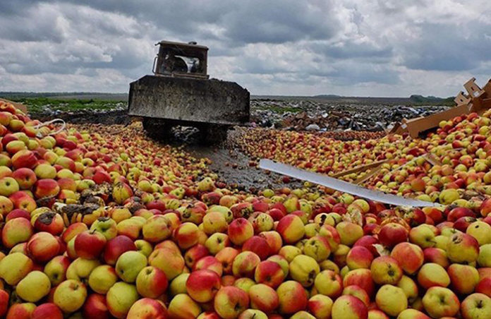 В Псковской области уничтожили очередную партию контрафактных фруктов и овощей
