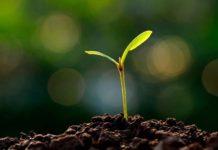 В Татарстане разработают целевую программу повышения плодородия земель сельхозначения на 6 лет
