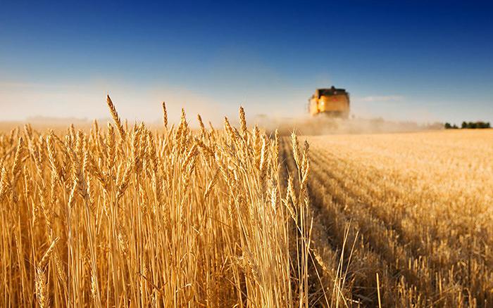 В январе-феврале сельхозпроизводство в России выросло на 0_9%