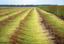 В сельском хозяйстве Тверской области сделают ставку на лен и животноводство