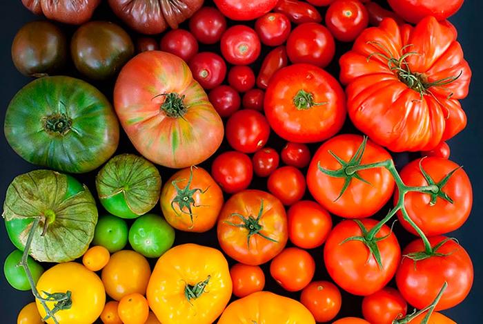Виды и сорта помидоров