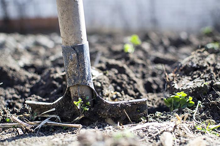 Вильфанд дал россиянам рекомендации по огородным работам