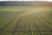 Американский Минсельхоз осудил Вьетнам за отказ от глифосата и предрек ему пестицидный беспредел