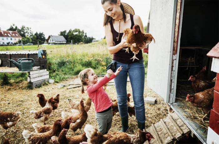 Биологические особенности кур