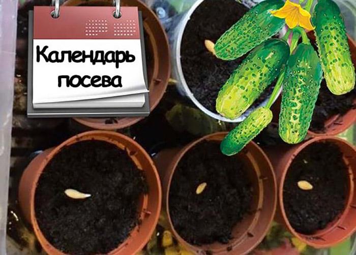 Благоприятные дни для посева семян огурцов на рассаду по лунному календарю в 2019 году