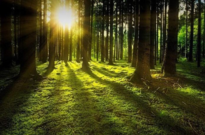 Чиновников хотят штрафовать за сокрытие информации о санитарном состоянии лесов