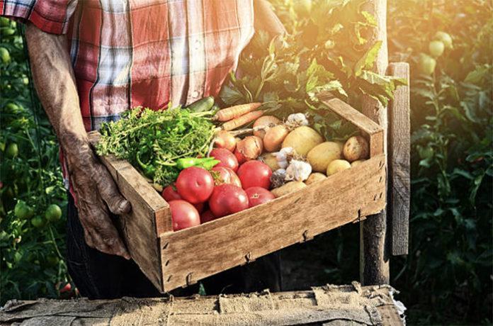 Фермеры Омской области будут получать господдержку только при условии официального трудоустройства своих работников