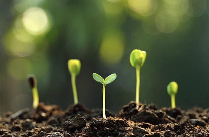 Где фермерам брать органические семена