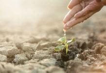 Где же взять органические семена