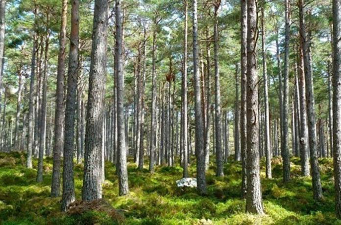 Госпрограмма «Развитие лесного хозяйства» продлена до 2024 года