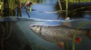 Интеграция выращивания рыбы