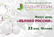 Яблоко России