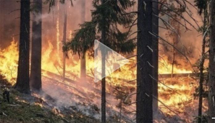 Какой будет ответственность за поджог травы?