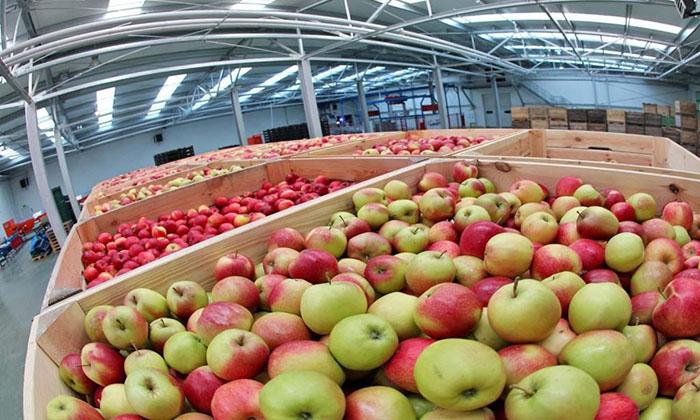 Крыму планируют создать комплекс по хранению фруктов за 3,8 млрд рублей