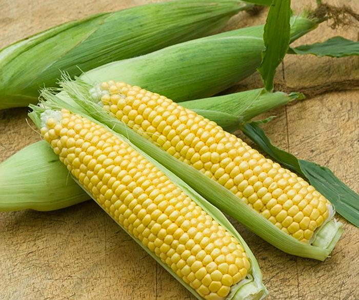 Кукуруза сахарная (Zea mays saccharata)