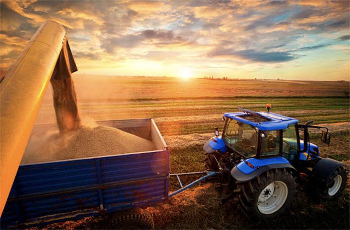 Мировой урожай пшеницы в сезоне-2019/20 вырастет на 3,2%