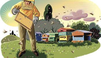 Пчелы в передвижных павильонах