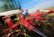 Омская область 1 июня приступит к цифровизации сельского хозяйства